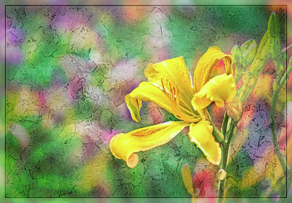 Wall Art - Photograph - Daylily Fresco by Ches Black