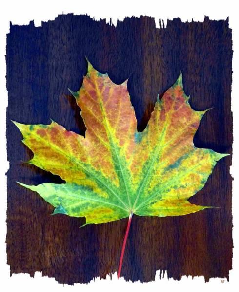 Border Mixed Media - Days Of Autumn 2 by Will Borden