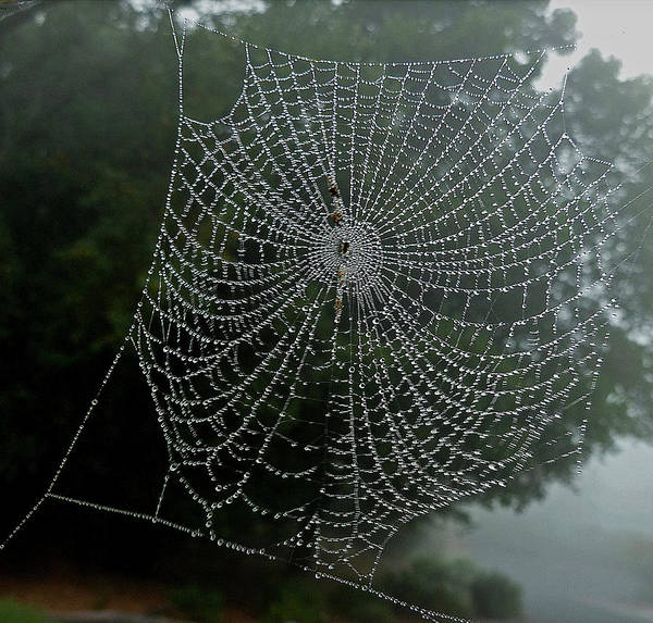 Photograph - Db6325-dc Spiderweb On Sonoma Mountain by Ed Cooper Photography
