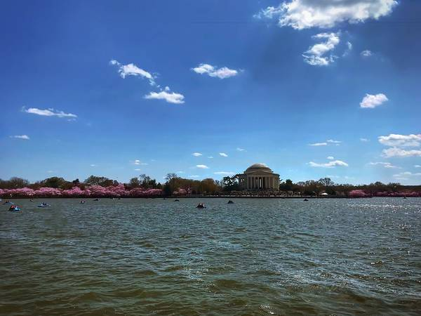 Photograph - Dc Cherry Blossoms 2018 by Chris Montcalmo