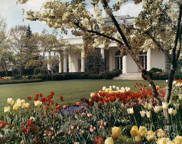 Photograph - D.c.: White House, C1970 by Granger