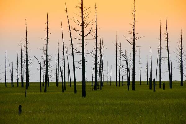 Photograph - Dead Cedars by Louis Dallara