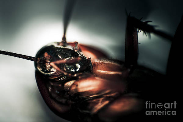 Etched Photograph - Dead Cockroach by Jorgo Photography - Wall Art Gallery