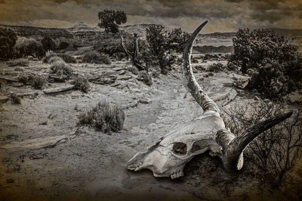 Photograph - Dead Cow Skull Of A Longhorn Steer by Randall Nyhof