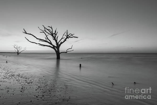 Wall Art - Photograph - Dead Forest Sunrise Bw by Michael Ver Sprill