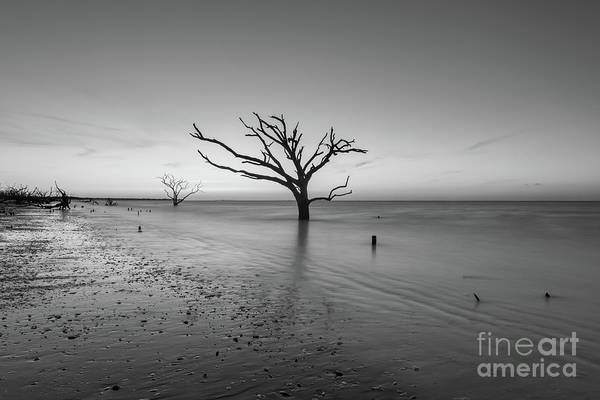 Wall Art - Photograph - Dead Forest Sunrise Centered Bw by Michael Ver Sprill