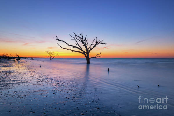 Wall Art - Photograph - Dead Forest Sunrise Centered  by Michael Ver Sprill