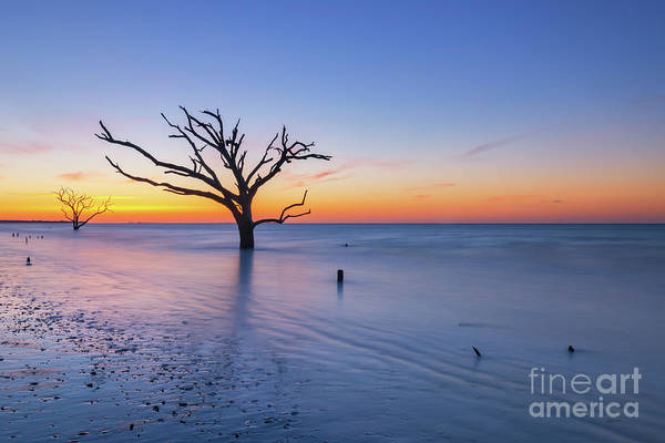Wall Art - Photograph - Dead Forest Sunrise  by Michael Ver Sprill