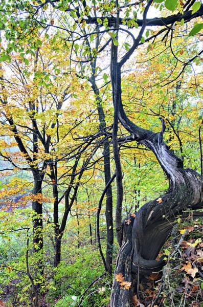 Wall Art - Photograph - Dead Of Autumn 2 by Bonfire Photography
