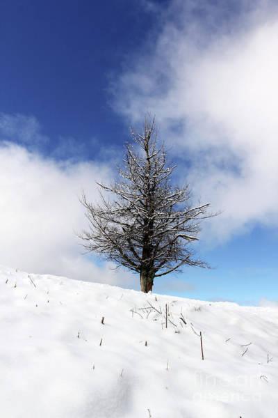 Photograph - Dead Pine In Winter by Jennifer Robin