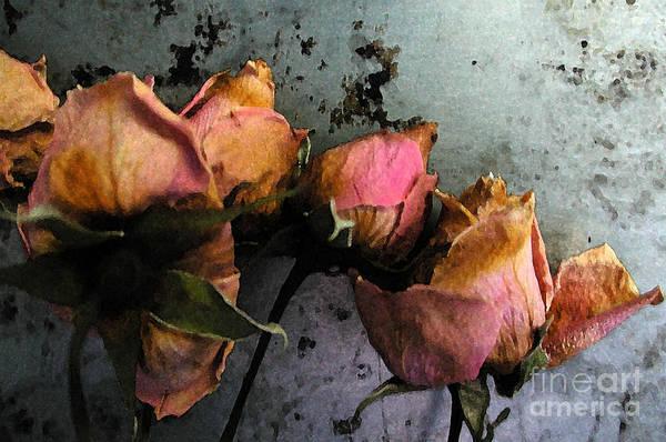 Dead Roses 2 Art Print