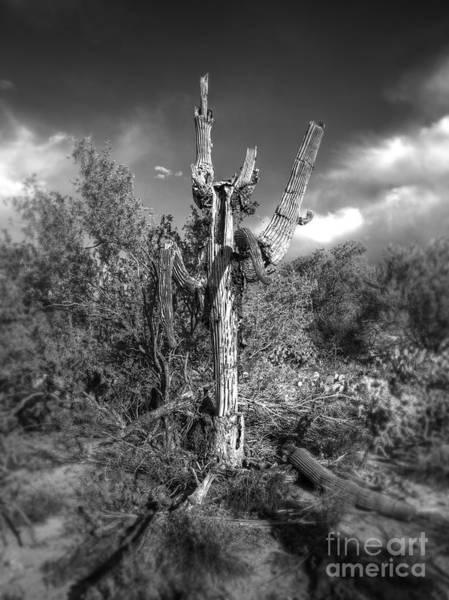 Expanse Photograph - Dead Saguaro Cactus by Arni Katz