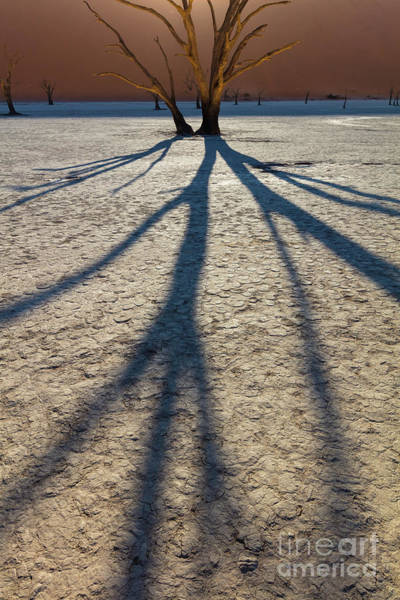 Nps Photograph - Dead Shadows by Inge Johnsson