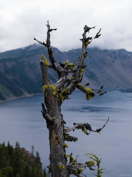 Photograph - Dead Tree by Alexander Fedin