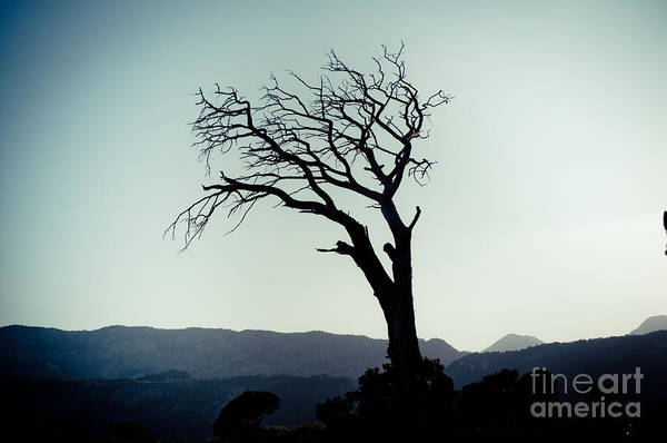 Photograph - Dead Tree At The Sky by Raimond Klavins