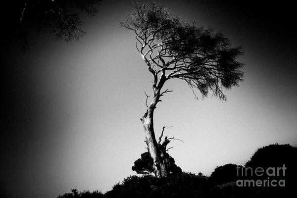 Photograph - Dead Tree Bw by Raimond Klavins