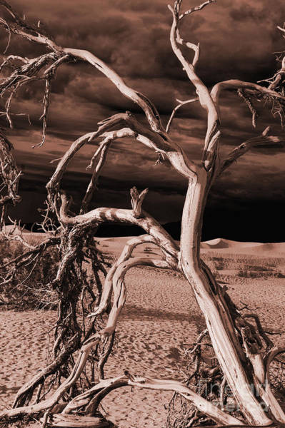 Wall Art - Photograph - Dead Tree In Death Valley 15 by Micah May