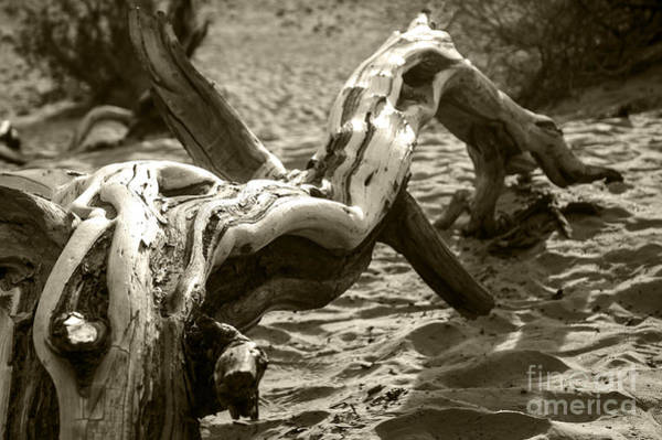 Wall Art - Photograph - Dead Tree In Death Valley 17 by Micah May
