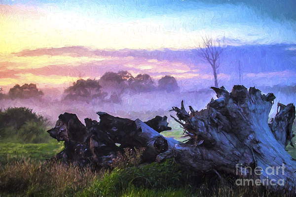 Wall Art - Photograph - Dead Tree In Morning Mist by Sheila Smart Fine Art Photography