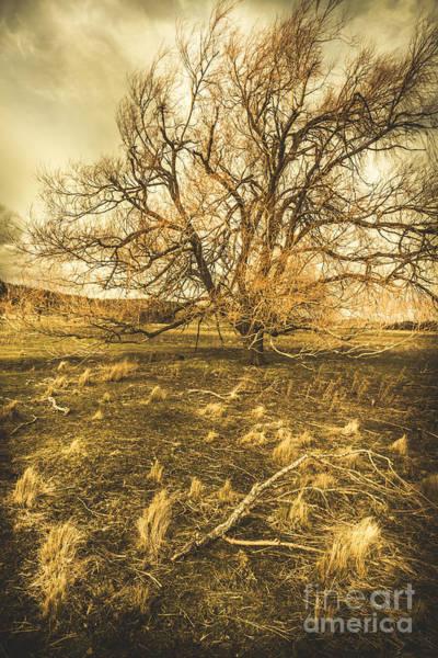 Burnt Orange Photograph - Dead Tree In Seasons Bare by Jorgo Photography - Wall Art Gallery