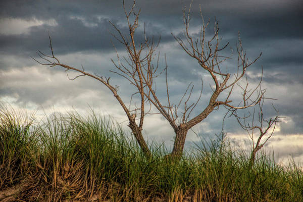 Photograph - Dead Tree On A Sand Dune At Ottawa Beach by Randall Nyhof