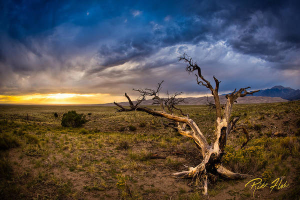 Photograph - Dead Tree On The High Desert by Rikk Flohr