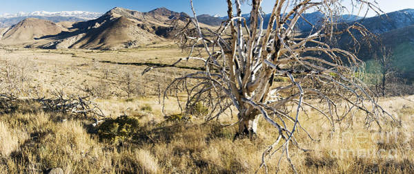 Photograph - Dead Tree Panorama by Norman Andrus