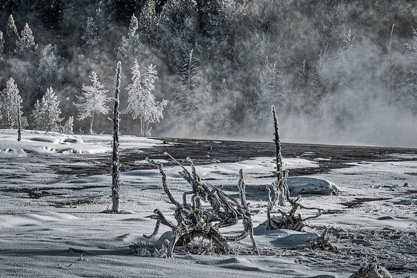 Photograph - Dead Tree Roots By The Thermal - Yellowstone by Stuart Litoff