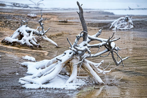 Photograph - Dead Tree Roots In The Thermal - Yellowstone by Stuart Litoff