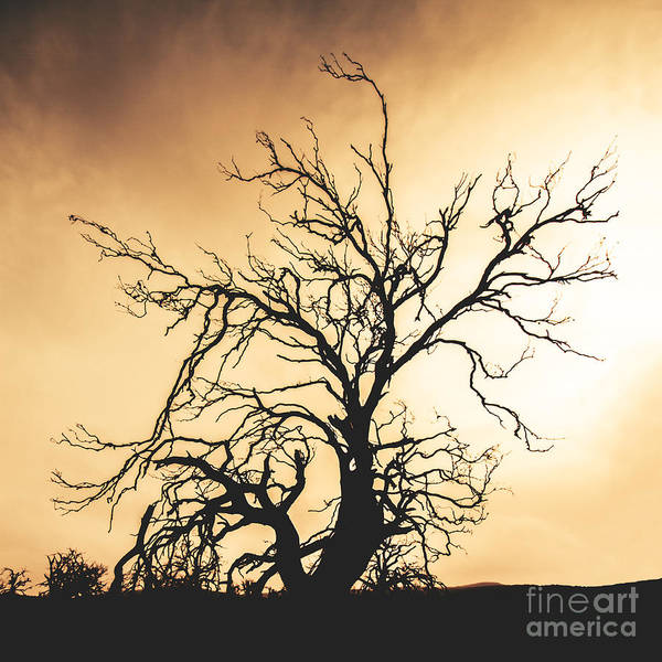 Char Wall Art - Photograph - Dead Tree Silhouette by Jorgo Photography - Wall Art Gallery