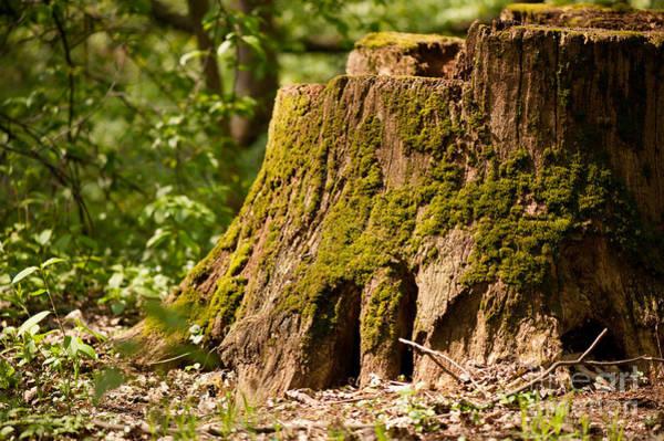 Wall Art - Photograph - Dead Tree Stump Moss Grown by Arletta Cwalina