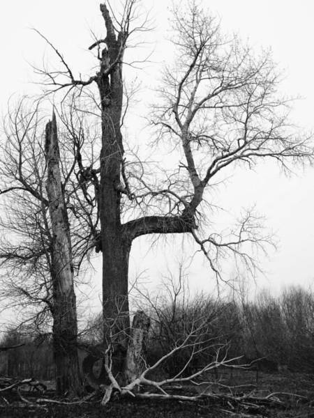 Photograph - Dead Tree Ten Mile Creek by Dutch Bieber