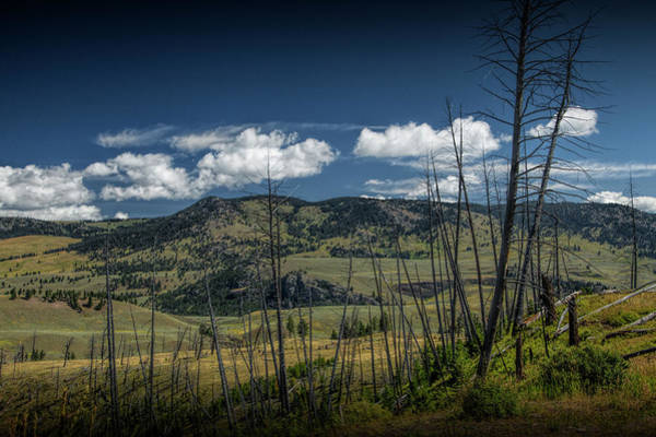 Photograph - Dead Tree Trunks In The Mountain Foothills by Randall Nyhof