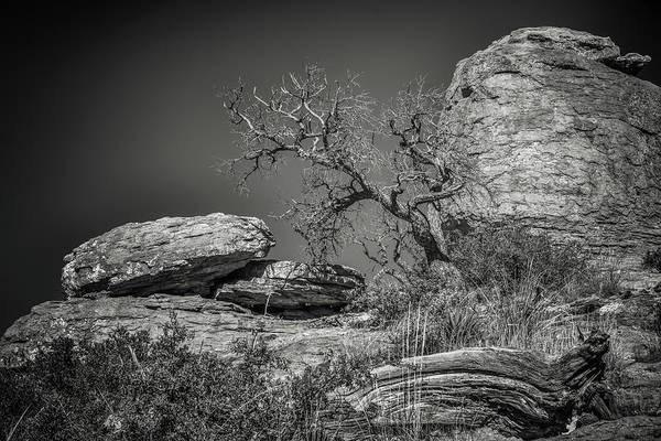 Wall Art - Photograph - Dead Tree With Boulders by Joseph Smith