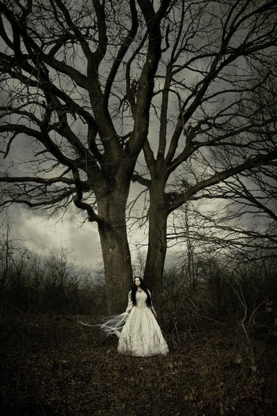 Gothic Photograph - Dead Tree by Cambion Art