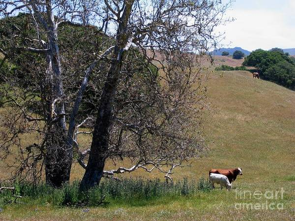 Photograph - Dead Trees And Outstanding Cows by James B Toy