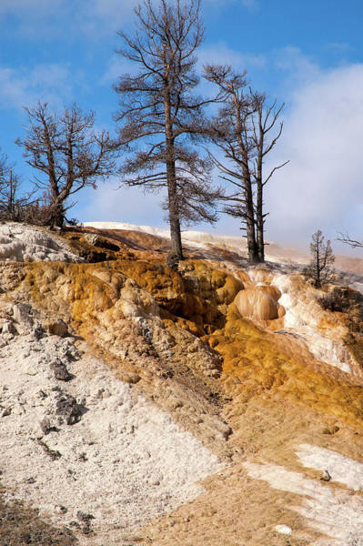 Photograph - Dead Trees At Mammoth by Steve Stuller