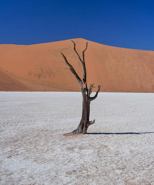 Photograph - Dead Vlei Solo by Rand