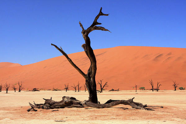 Photograph - Dead Vlei Tree  by Aidan Moran