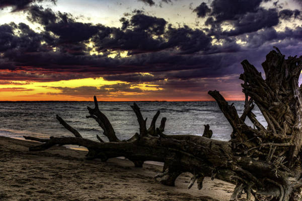 Photograph - Dead Wood II by Pete Federico