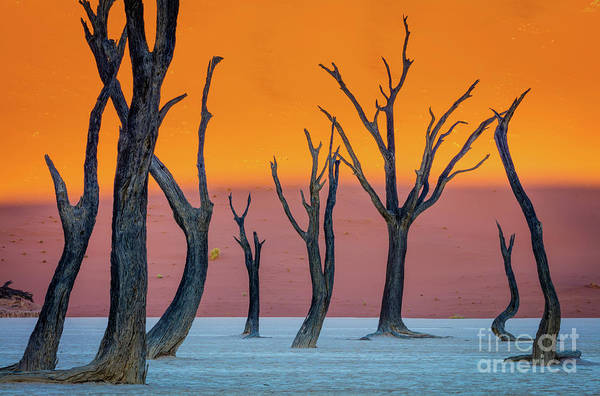 Photograph - Deadvlei Abstract by Inge Johnsson