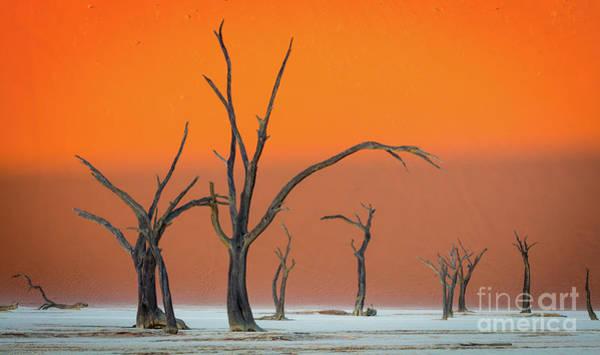 Nps Photograph - Deadvlei Trees by Inge Johnsson