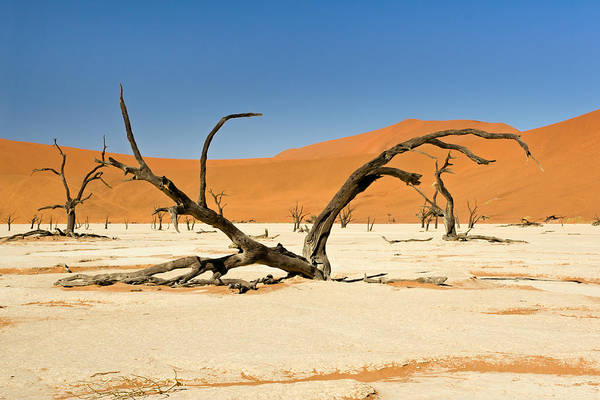 Photograph - Deadvlei With Tree by Aivar Mikko
