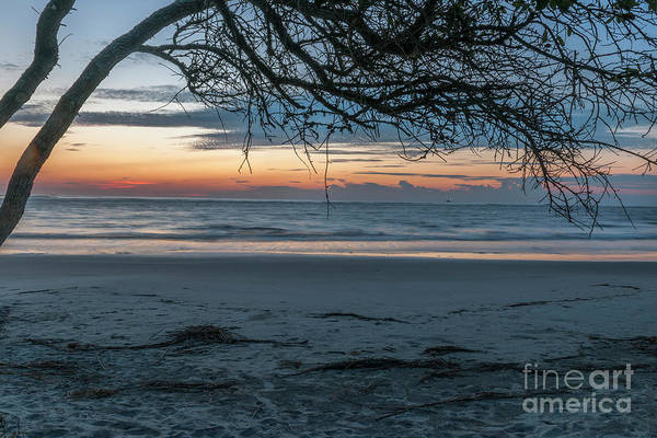 Photograph - Deadwood Sunrise Over The Atlantic Ocean by Dale Powell