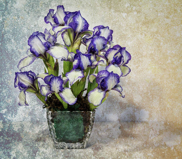Photograph - Dwarf Iris Still Life With Vase by Patti Deters