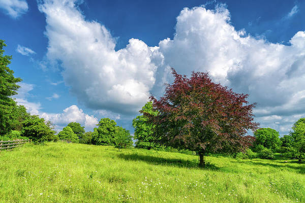 Photograph - Dean's Meadow by James Billings