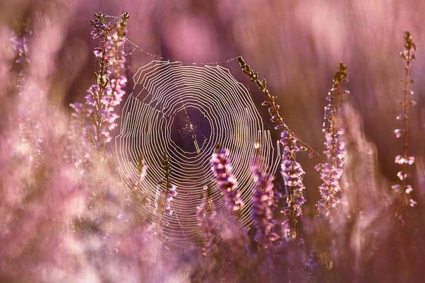 Heath Photograph - Dear Heather - Heath In Bloom by Roeselien Raimond