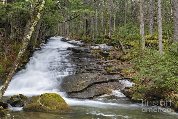 Photograph - Dearth Brook Falls - Landaff New Hampshire Usa by Erin Paul Donovan