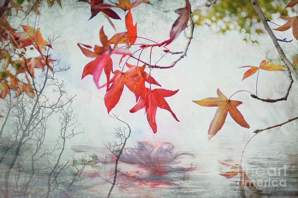Photograph - Death In Autumn by Elaine Teague
