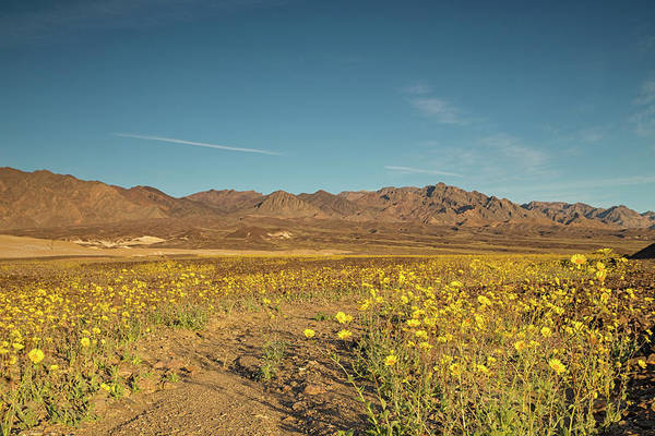 Death Valley Np Photograph - Death Valley 2016 Super Bloom by Kunal Mehra